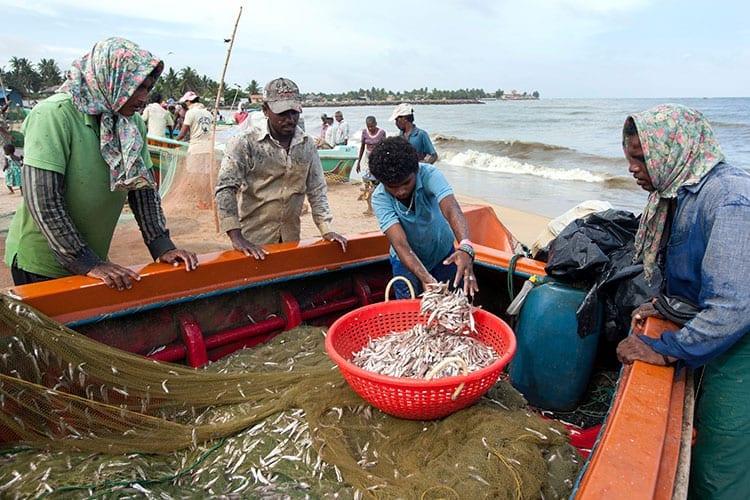 Vismarkt van Negombo