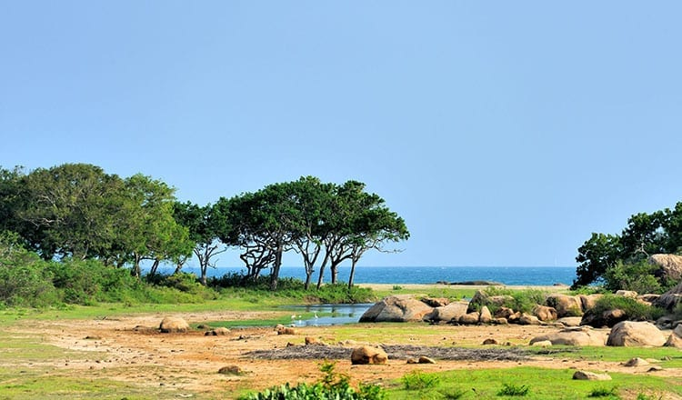 Yala National Park zee