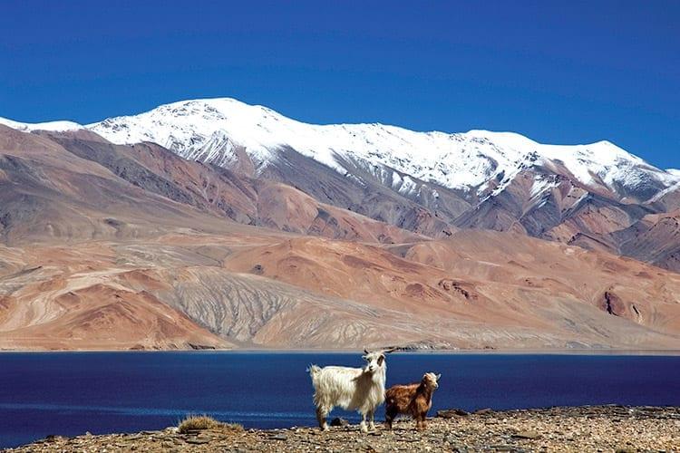 Tsomoriri Lake, Ladakh