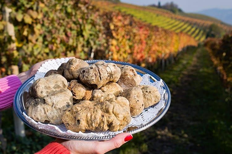 Witte truffels in Piemonte