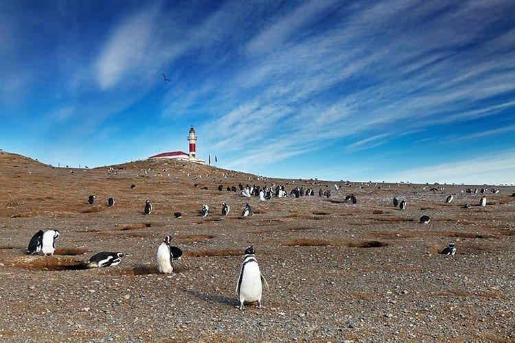 Pinguïnkolonie Patagonië