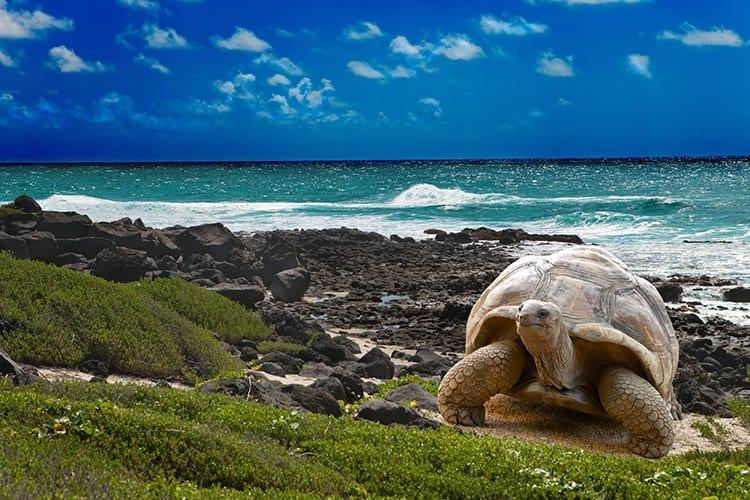 Galapagos eilanden