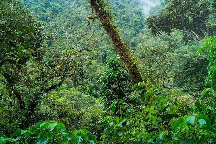 Nationaal Park Podocarpus