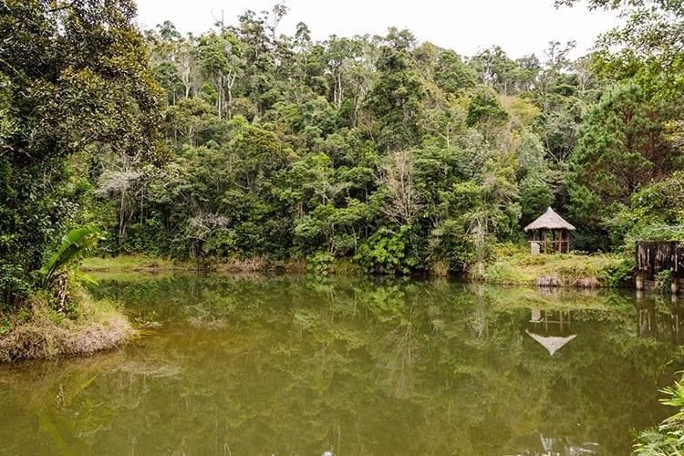 Regenwoud in het Andasibe Mantadia National Park