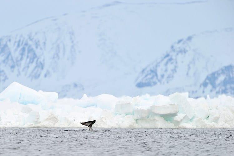 Baffineiland, Canada