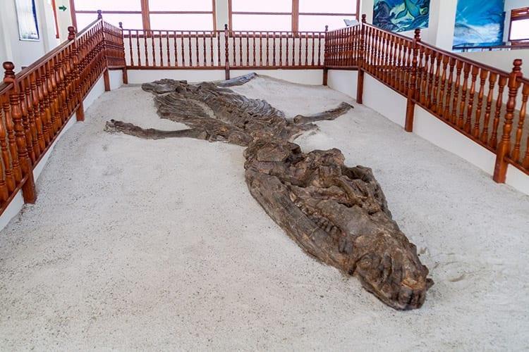 El Fósil museum, Villa de Leyva