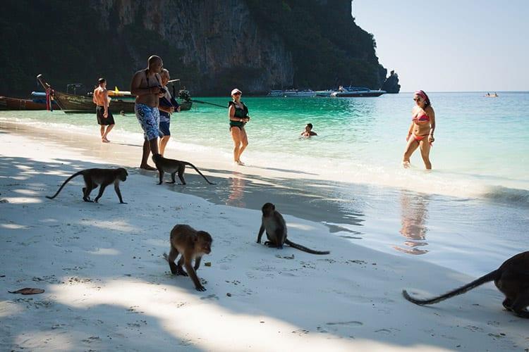 Monkey Beach, Koh Phi Phi
