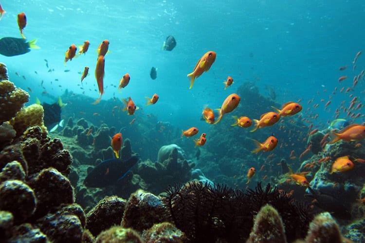 De onderwaterwereld bij Weh