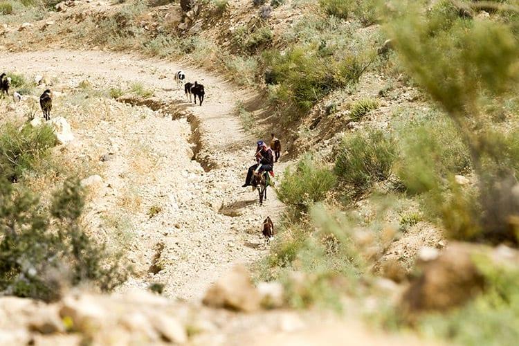 Dana Natuurreservaat herder