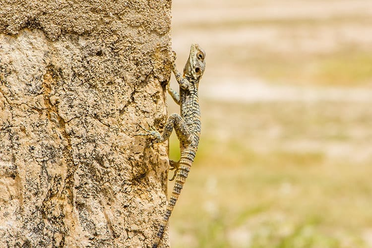 Dana Natuurreservaat wildlife