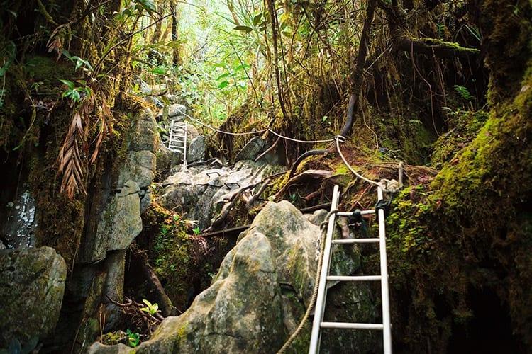 Hiken in het Gunung Mulu National Park