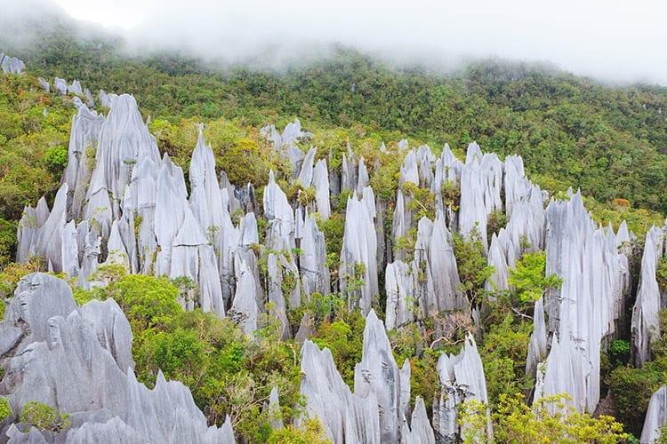 Pinnacles, Gunung Mulu National Park