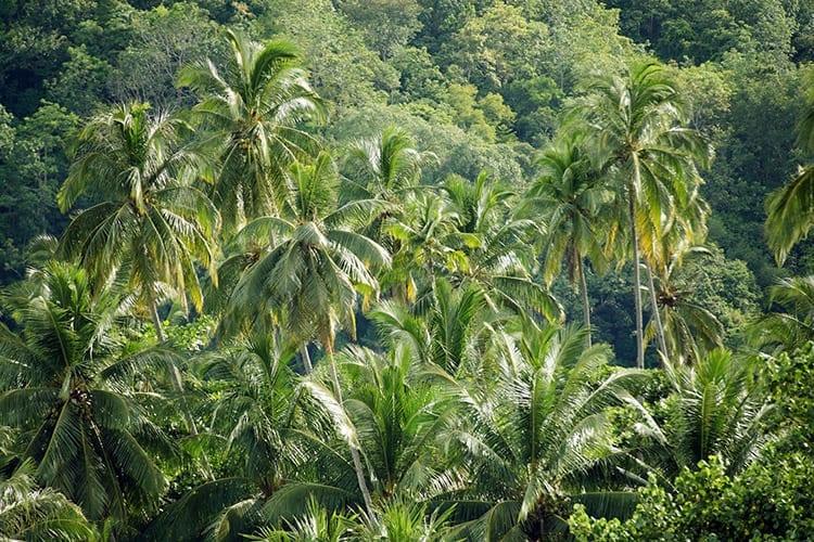 Jungle op Tioman