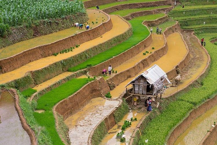 Mu Cang Chai rijstterrassen