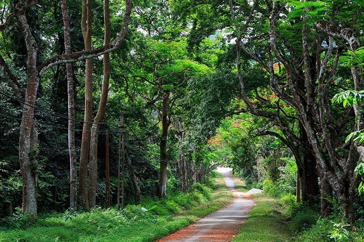 Cuc Phuong National Park, Ninh Binh