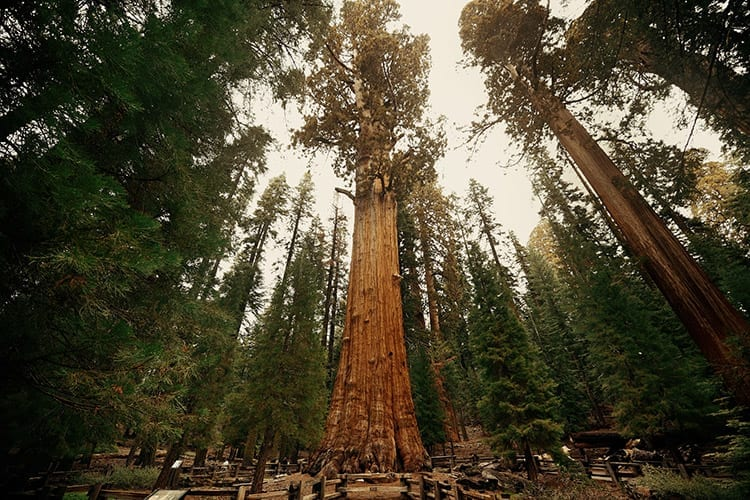General Sherman Tree, Sequoia National Park
