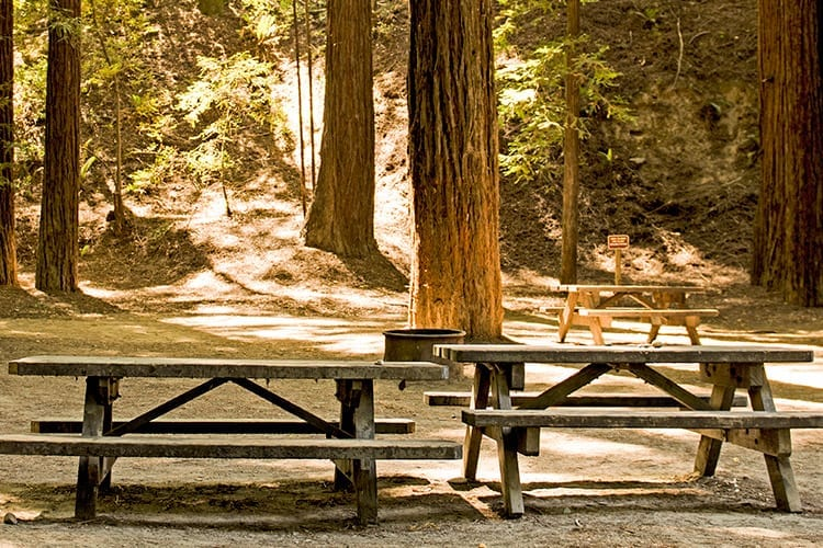 Giant Forest Area, Sequoia National Park