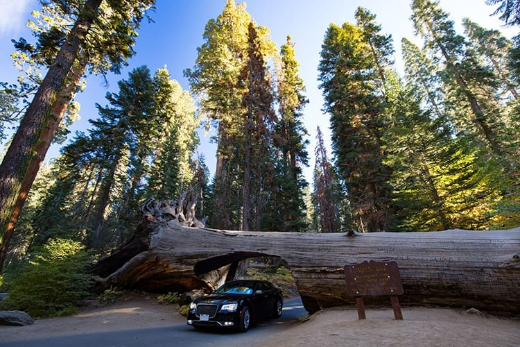 Tunnel Log, Sequoia National Park