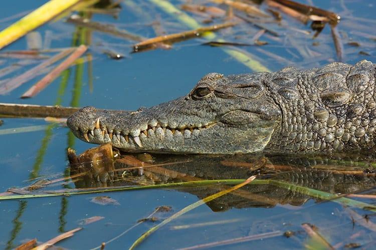 Gambia Rivier wildlife