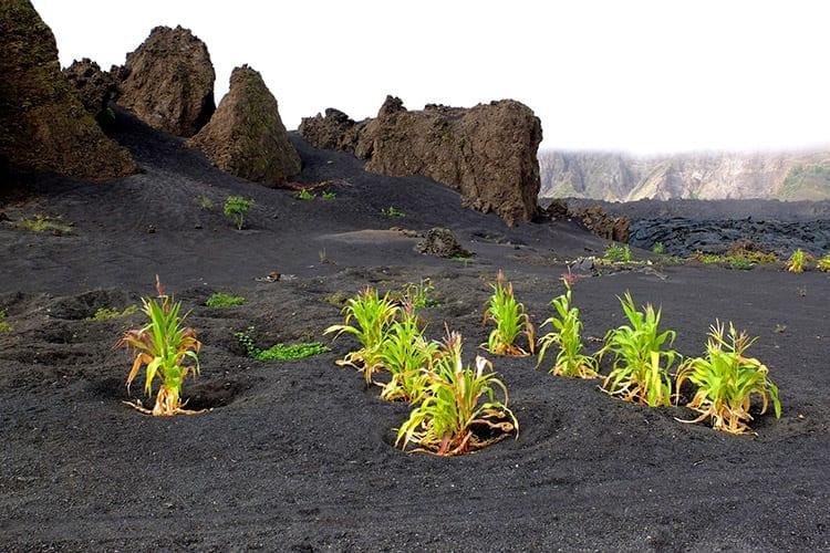 Fogo vulkaanlandschap