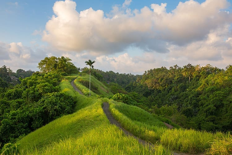Campuhan Ridge Walk, Ubud