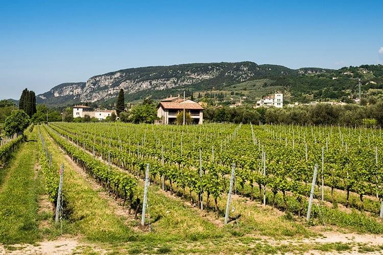 Wijngaard in de buurt van Bardolino