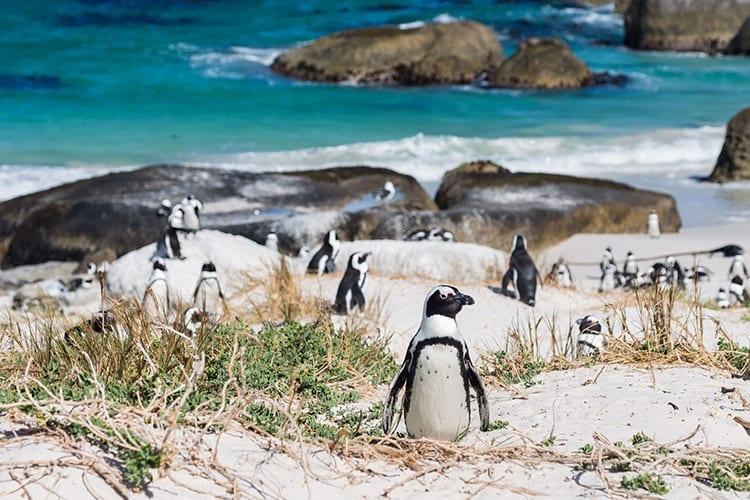 Boulders Beach, Zuid-Afrika