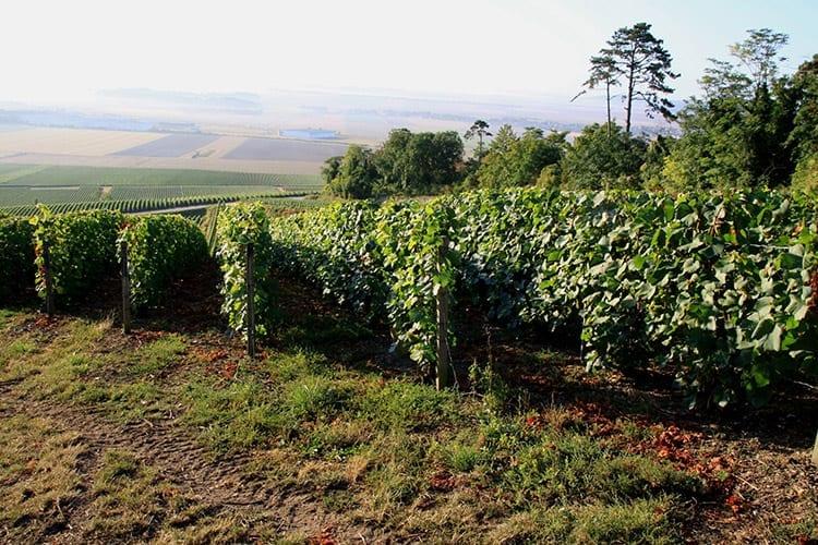 Auvergne wijngaarden