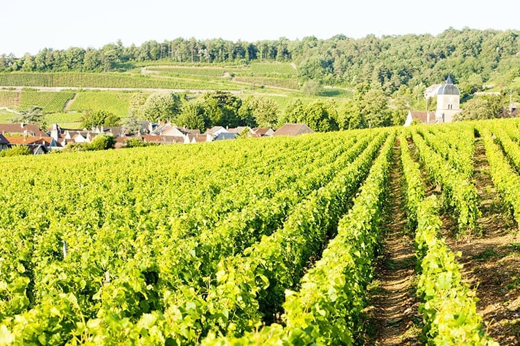 La Route des Grands Crus, Bourgogne