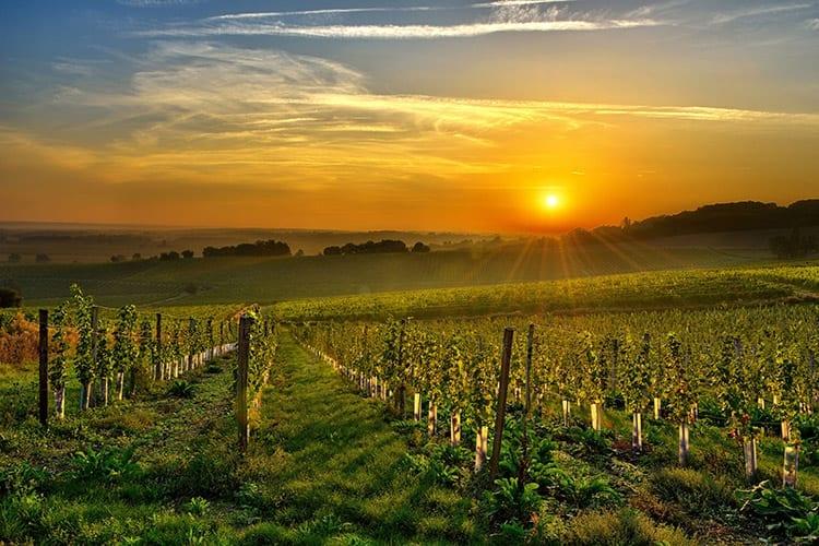 Wijngaarden bij Bergerac, Dordogne