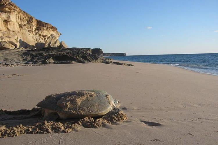 Turtle Reserve Ras Al Jinz