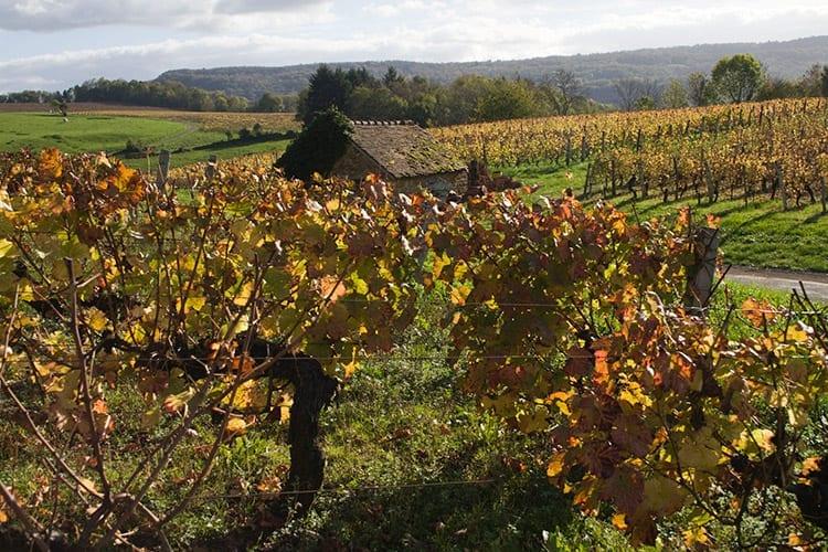 Wijngaarden bij Arbois, Jura