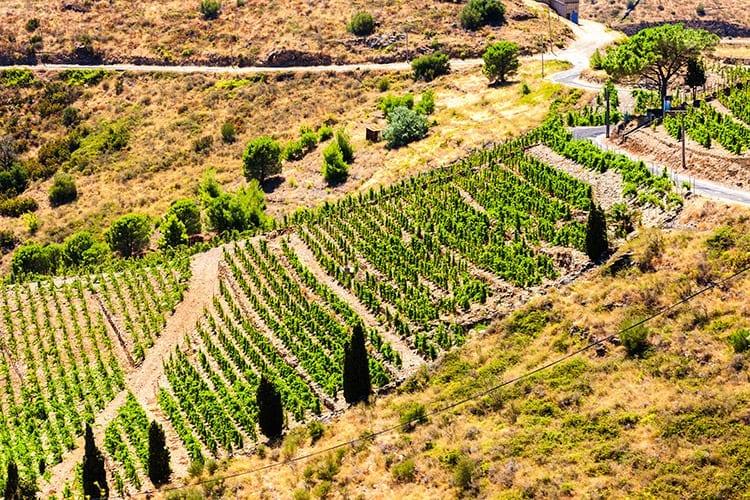 Wijngebieden van Languedoc-Roussillon