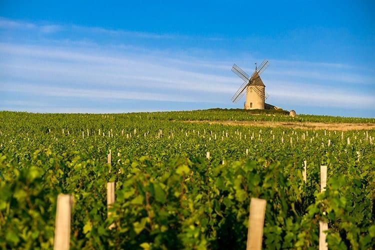 Wijnvelden in de Beaujolais regio