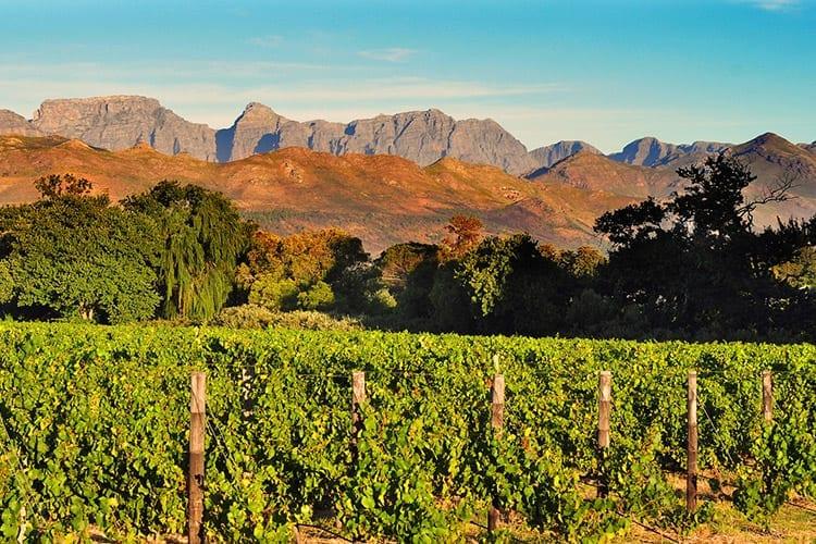 Westkaap Stellenbosch, Zuid-Afrika