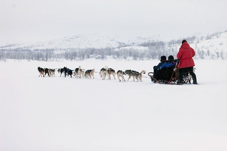 Husky's, Zweeds Lapland