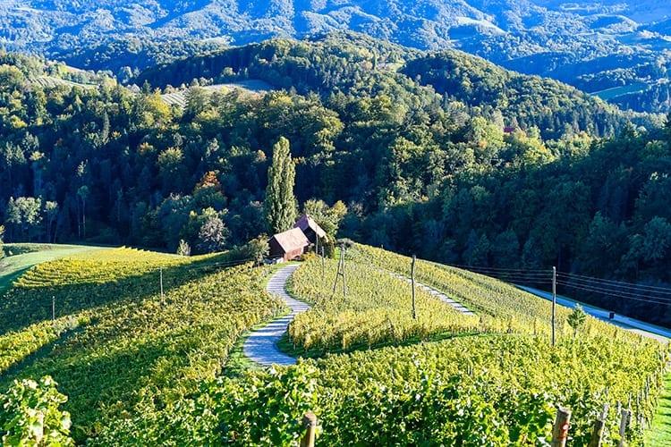 Wijngaard vlakbij Maribor