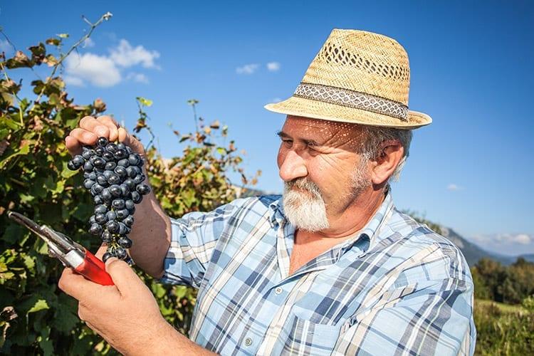 Vipava Valley wijn