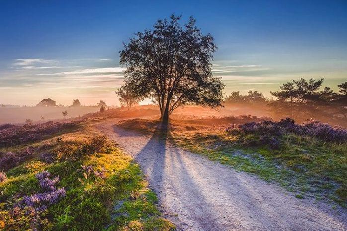 Hoge Veluwe, Nederland