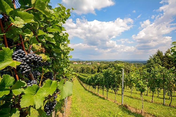Weinviertel. Neder-Oostenrijk