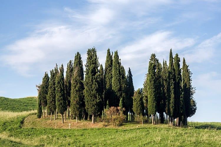 Cypressen bij San Quirico d'Orcia, Toscane