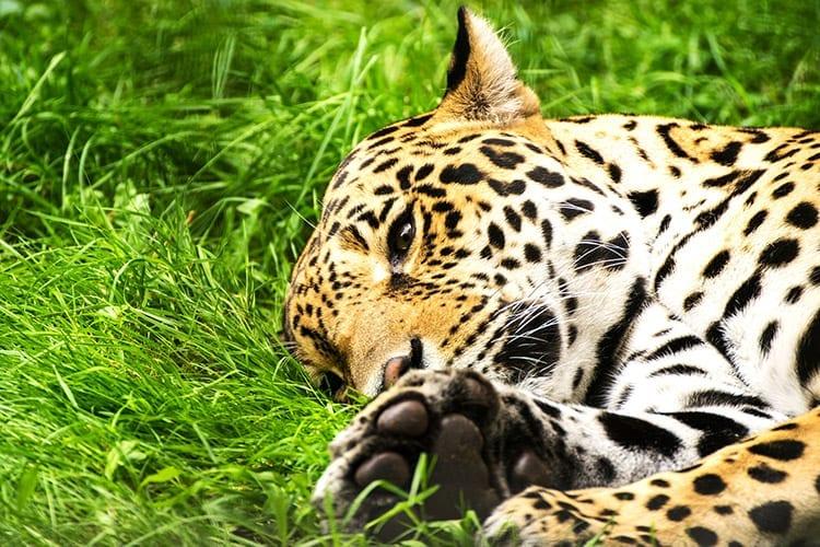 Belize Zoo, Belize City