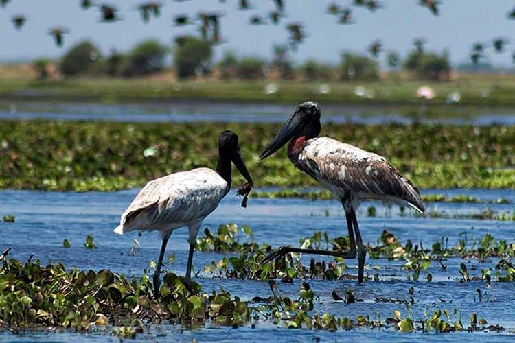 Cooked Tree Wildlife Sanctuary, Belize City