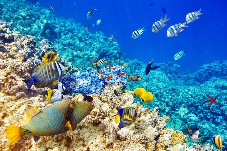 Duiken bij Belize's Barrière rif