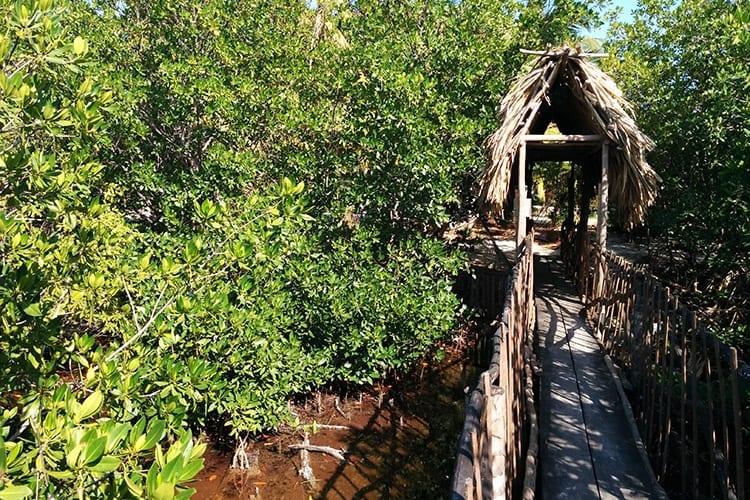 Forest Reserve, Caye Caulker