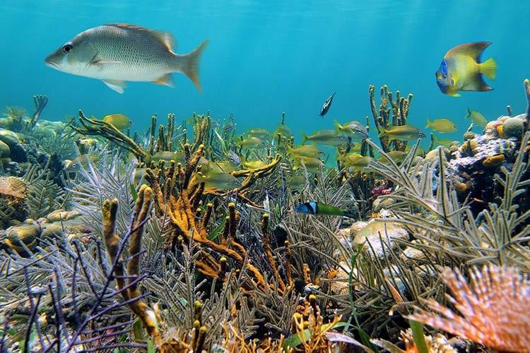 Onderwaterwereld Great Blue Hole