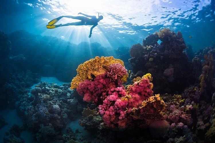 Duiken Rode Zee, Egypte