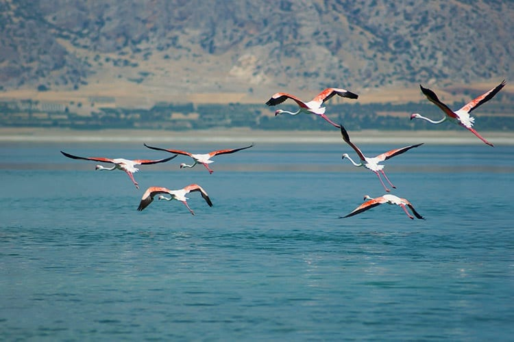 Kuscenneti National Park, Turkije