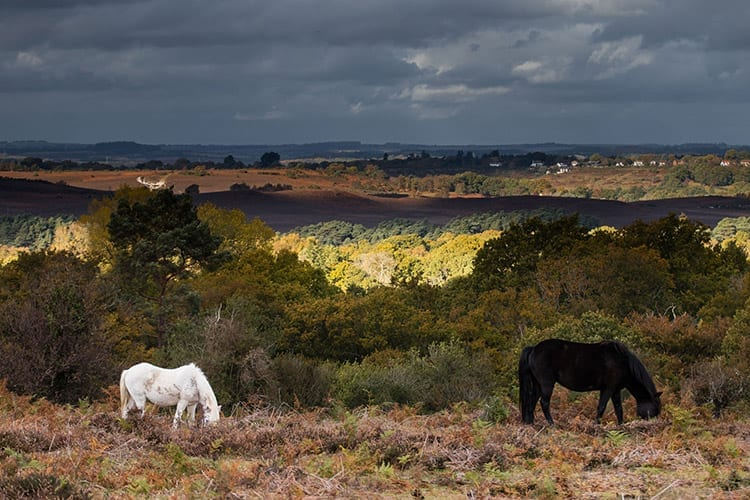 New Forest National Park, Hampshire