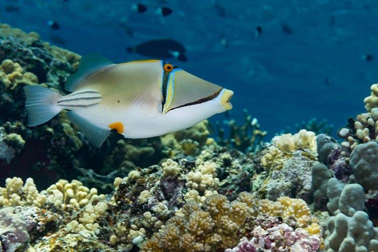 Elphinstone-rif, Egypte